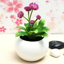 Plants For Office Best Office Plants Flowers Best Tall Indoor Plants How To Care