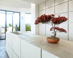 Small Indoor Trees by Bonsai In Popular Culture Ezbonsai