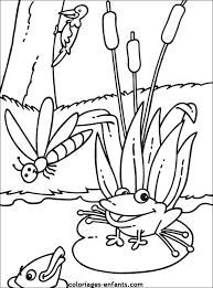 30 dessins de coloriage Grenouille à imprimer