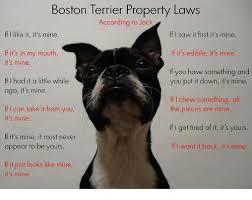 Boston Terrier Meme - boston terrier property laws according to jack if like it it s mine