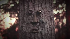 phish fall tour tree faces youtube