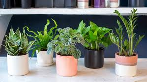 top house plants 14 top houseplants you should pick for very low light area tnc