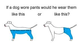 Know Your Meme Dog - if a dog wore pants know your meme