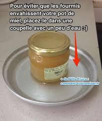 de fourmis dans la cuisine l astuce toute simple pour protéger vos aliments des fourmis