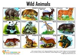 wild animals images Kids science projects wild animals 2 free download jpg
