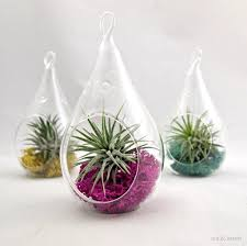 home decoration awesome hanging pear shaped glass terrarium