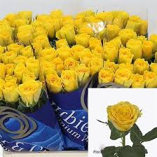 Wholesale Roses Rose Solero 60cm Wholesale Flowers U0026 Florist Supplies Uk