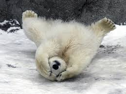 feel better bears 15 adorable snowy animal pictures to make you feel better about