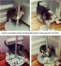 Working Cat Meme - 83 best cat images on pinterest funny cats funny animal and