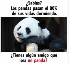 Memes De Pandas - dopl3r com memes isabías los pandas pasan el 80 de sus vidas