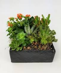 plant delivery seattle wa succulent terrarium delivery same day delivery