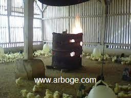 Termometer Kandang Ayam stabilkan produktifitas ayam dengan kontrol suhu dan kelembaban