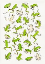 25 frog drawing ideas google images mouse