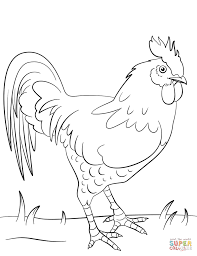 chic design rooster coloring page farm animal pages free 224