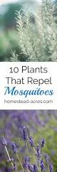 how to keep mosquitoes away from patio home outdoor decoration