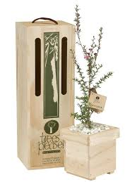 delivered gifts 34 best tree gifts by trees images on