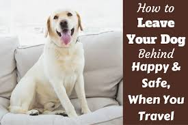 tips for leaving your dog behind when you travel or go on vacation