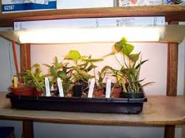 growing plants indoors with artificial light growing plants indoors under supplemental lighting kent kobayashi