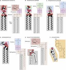 structure of biological membranes functional organization of the
