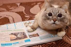 Newspaper Cat Meme - blini cat with newspaper blini cat know your meme