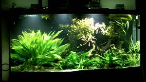 best led light for planted tank 72g low light planted tank with led part 1 youtube