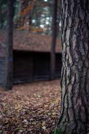 close up photo of tree trunk in forest free stock photo