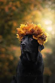 thanksgiving pet photos 95 best autumn dogs images on pinterest animals autumn and dog cat