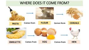 where does food come from