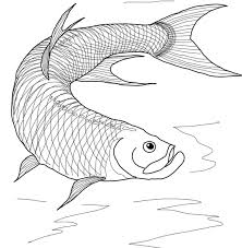 salmon fish coloring page coloring for kids barracuda animals beautiful realistic fish by