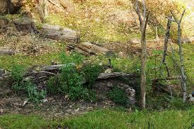 hugelkultur forest garden