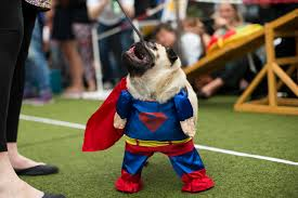 cannt crufts rooftop dog show tickets london outdoors