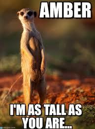 Amber Meme - amber meerkat friday meme on memegen