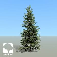 norway spruce species pack lumberyard speedtree
