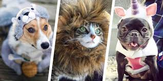 35 best and cat costumes 2017 pet costume ideas