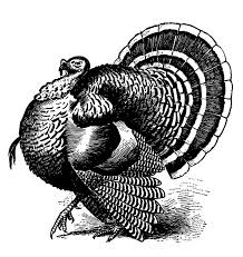 Thanksgiving Turkey Photos Free Big Turkey Cliparts Free Download Clip Art Free Clip Art On