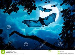 creepy bats fly halloween night full moon stock photos images