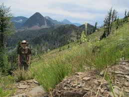 Cabinet Mountains Wilderness Friends Of The Inland Northwest Trail Help Support A Newly