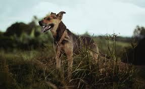 disposing of dog the green way david suzuki foundation