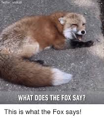 What Did The Fox Say Meme - twitter retokani what does the fox say this is what the fox says