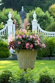 exclusive decor container gardening of flowers u2013 wilson rose garden