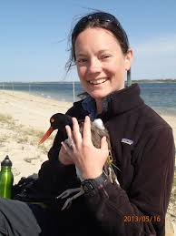 new study following atlantic seabirds to help siting of wind