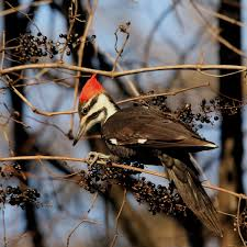 Arkansas Wildlife Tours images Birding the helena delta helena arkansas jpg