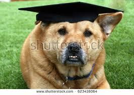 dog graduation cap dog wearing black graduation cap stock photo 623416064