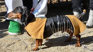 Weiner Dog Halloween Costumes Slink Toy Story Dax U0027s Costume Halloween