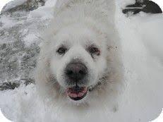 Dogs For The Blind Adoption 23 Best Jasmine Blind Dog Rescue Alliance Images On Pinterest