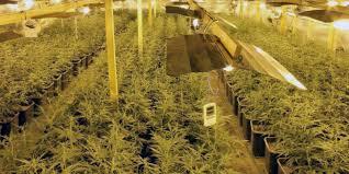 proper lights for growing weed how to build an indoor marijuana grow room