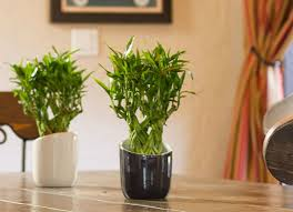 Best Plants For Living Room Best Indoor Plants 7 Picks For Every Room Bob Vila