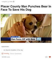 Orange Dog Meme - a dog s best friend dogs know your meme