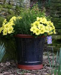 Plant Potters by Garden Centre Pembrokeshire Fishguard Garden Centre Gardening