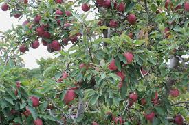 growing your favorite fruits on long island tbr news media